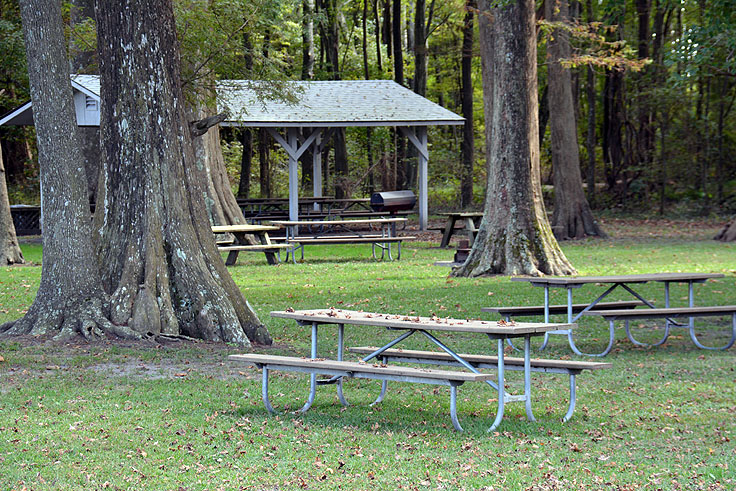 Expansive picnic area at Pettigrew State Park